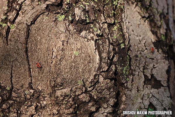 heart-on-tree